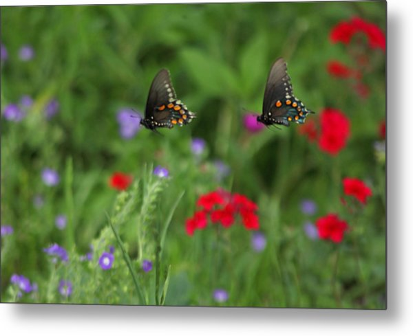 Butterfly Chase Metal Print