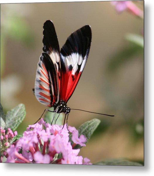 Butterfly Elegance Metal Print by Valia Bradshaw