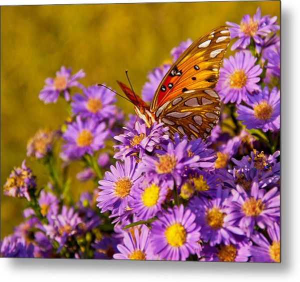 Metal Print featuring the photograph Butterfly by Francis Trudeau