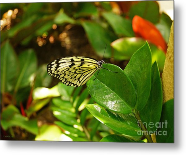 Butterfly In Yellow And Black Metal Print