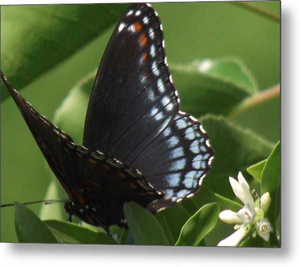 Butterfly Metal Print by Katherine Woods