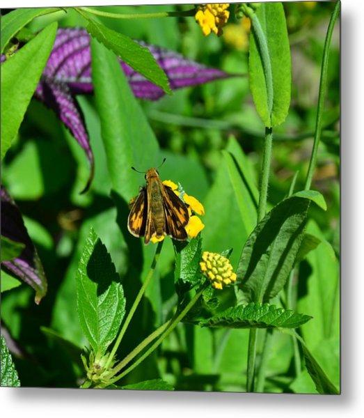 Butterfly Metal Print by Mark Bowmer