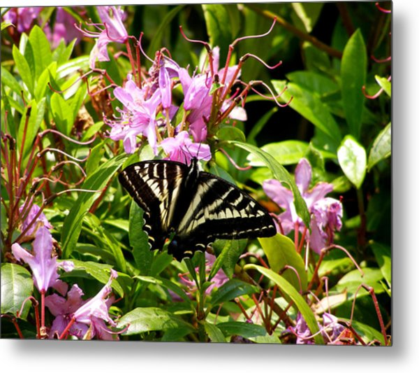 Butterfly On Flowers Metal Print by Mark Caldwell