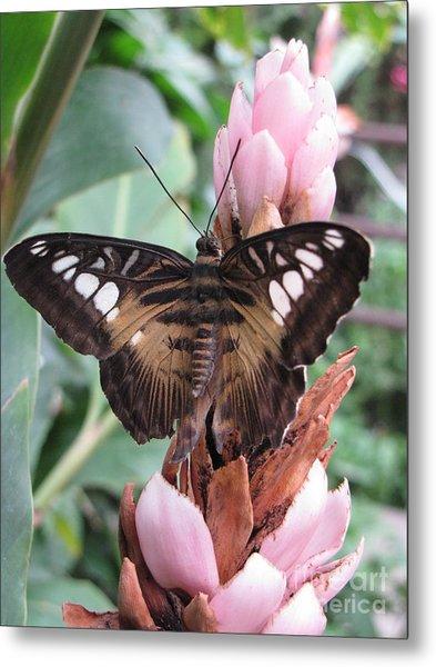 Butterfly Pavilion1 Metal Print