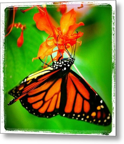 #butterfly #pretty #colorful Metal Print