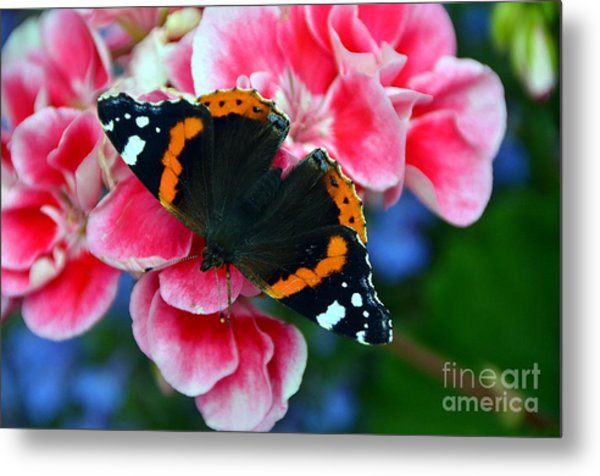 Butterfly Red Admiral Metal Print