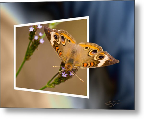 Butterfly Stepping Out Metal Print by Barry Jones