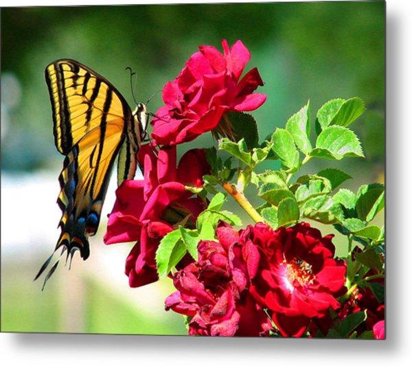 Butterflyrose Metal Print