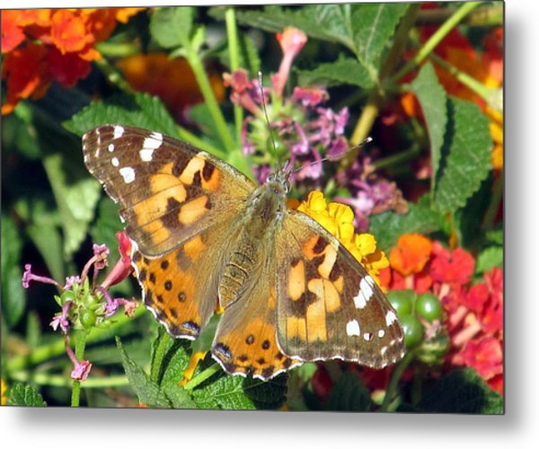 Buttery Fly Metal Print