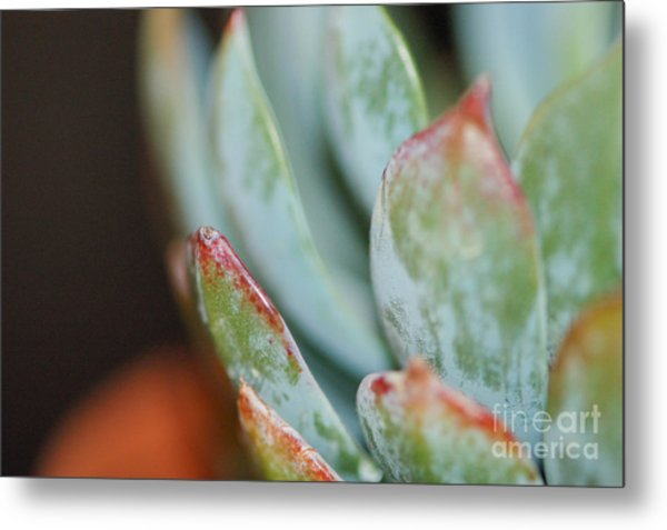 Cactus 1 Metal Print by Melissa Haley