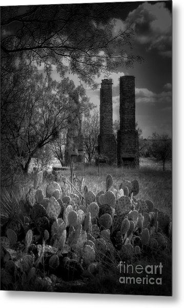 Cactus At Fort Phantom Hill Metal Print