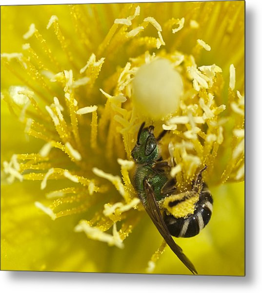 Cactus Flower And Bee Metal Print