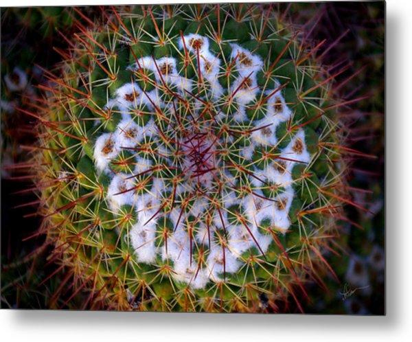 Cactus Radiance Metal Print