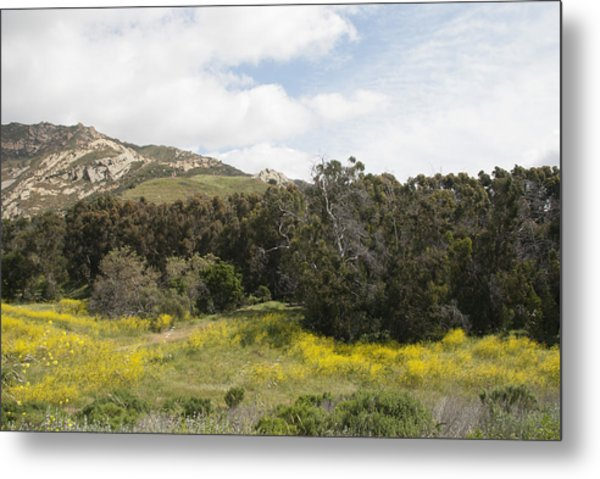 California Hillside View IIi Metal Print