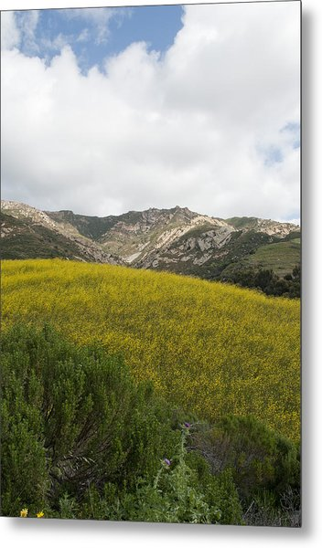 California Hillside View V Metal Print