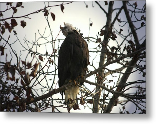 Call Of The Wild Metal Print by Carrie OBrien Sibley
