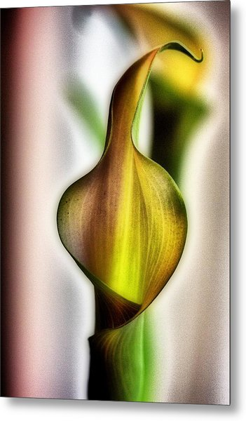 Calla Metal Print by Jennifer Woodworth
