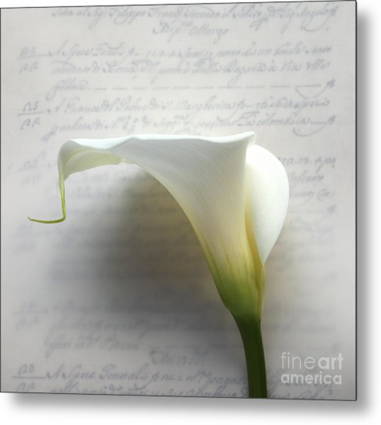 Calla Lily On Old Script Writing Metal Print by Ruby Hummersmith