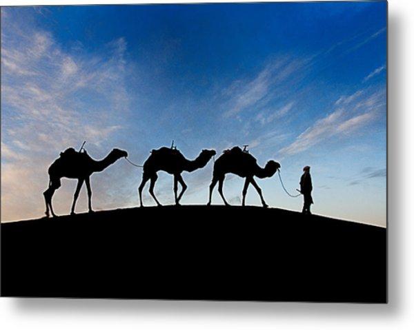 Camels - 3 Metal Print