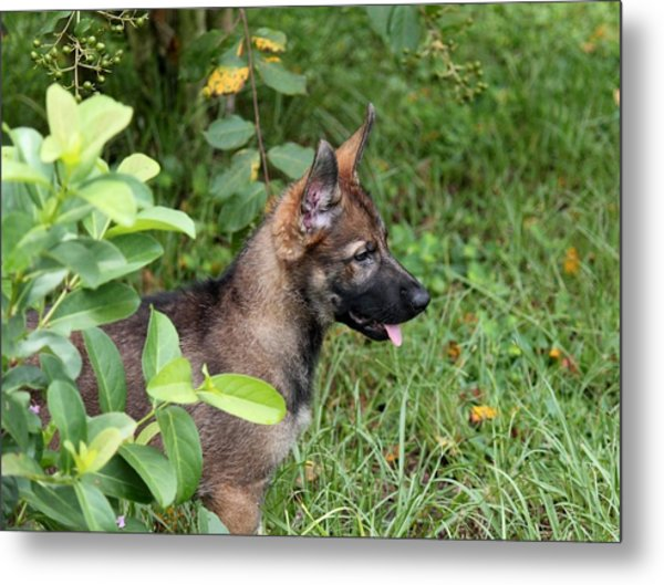 Camouflage Puppy Metal Print by Christean Ramage