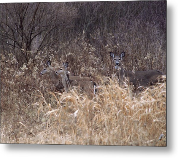 Camouflaged Deer Metal Print by Christy Woods