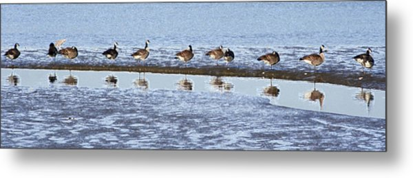 Canadian Geese Line Up Metal Print by Mary Gaines