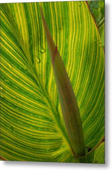 Canna Leaf Metal Print by Peg Toliver