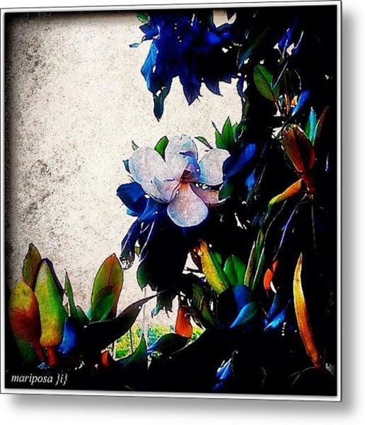 Canvas Magnolia Metal Print