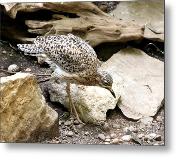 Cape Thick Knee Metal Print