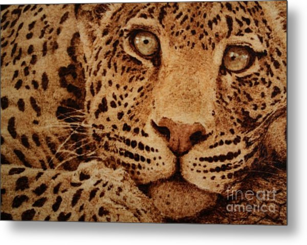 Captivated Metal Print by Steven Hawkes