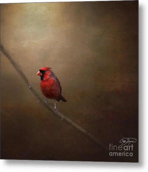 Cardinal Old Master - Artist Cris Hayes Metal Print