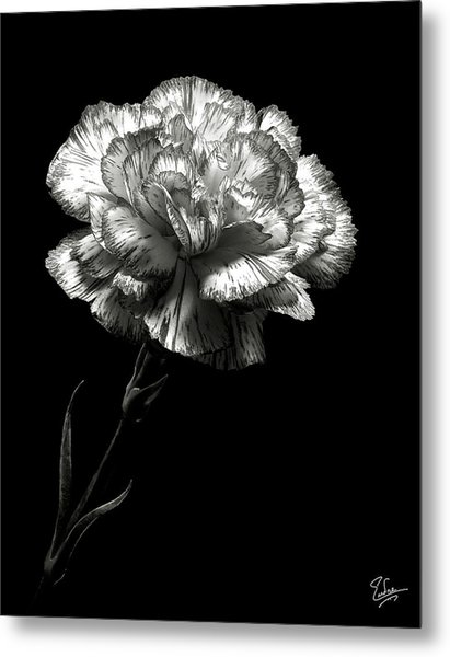 Carnation In Black And White Metal Print