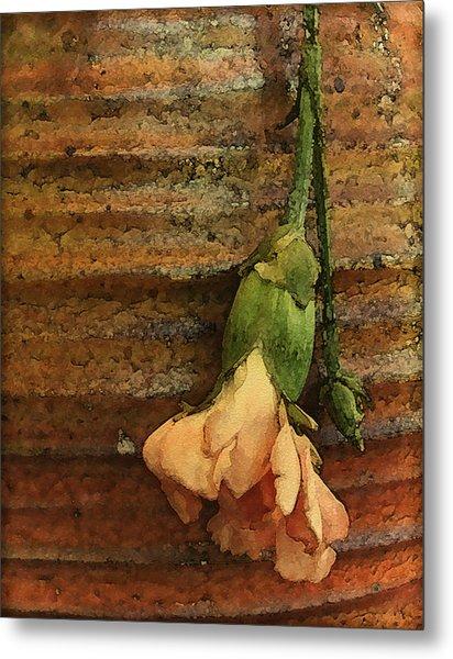 Albuquerque, New Mexico - Carnation Metal Print