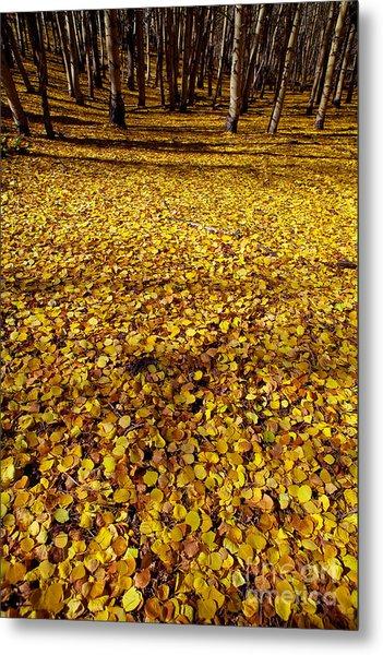 Carpet Of Aspen Leaves Metal Print