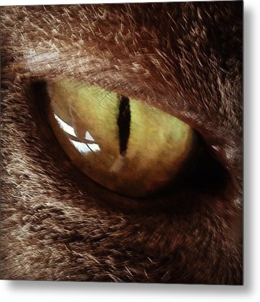 Cat Eye Metal Print