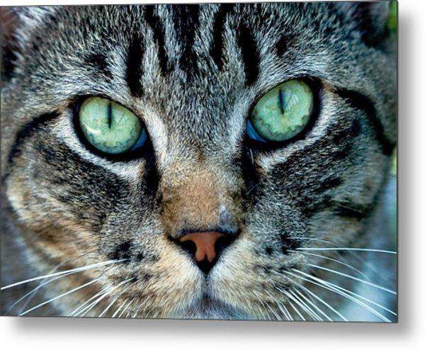 Cat Face Metal Print
