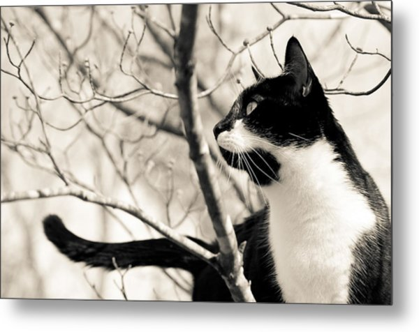 Cat In A Tree In Black And White Metal Print