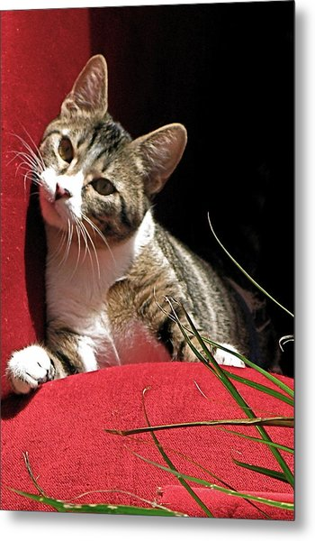 Cat On Red Metal Print by Inga Smith