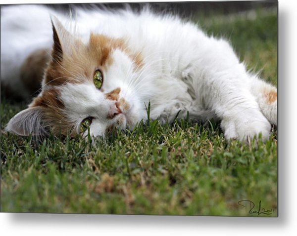 Cat On The Grass Metal Print