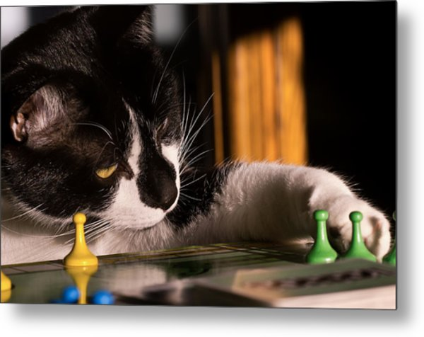 Cat Playing A Game Metal Print