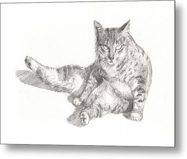 Cat Sitting Metal Print