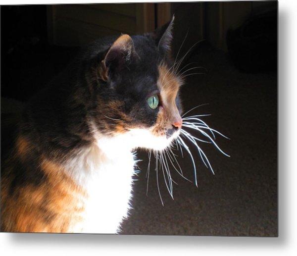 Cat Whiskers Metal Print