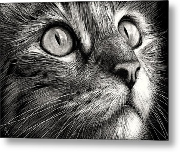 Cat's Face Metal Print