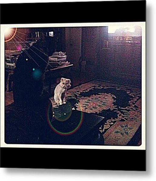 Cats From Another Planet Metal Print