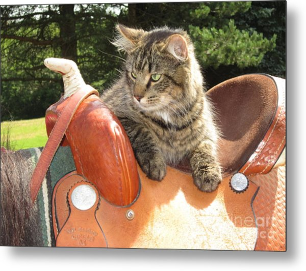Cats Ride Free Metal Print