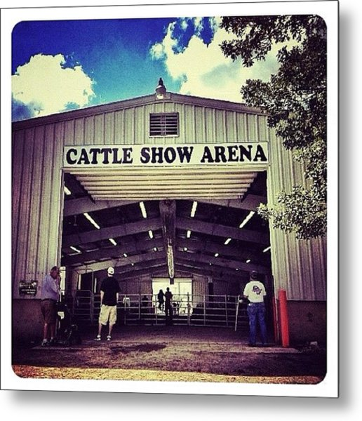 Cattle Show Arena Metal Print