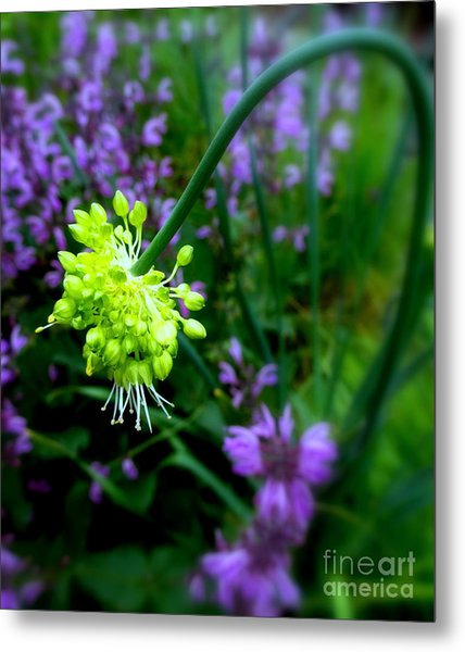 Chartreuse Metal Print by Maria Scarfone