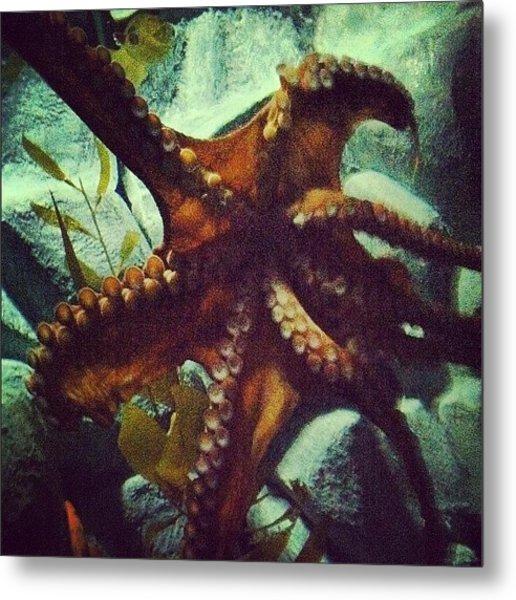 #chattanooga #tennessee #aquarium Metal Print