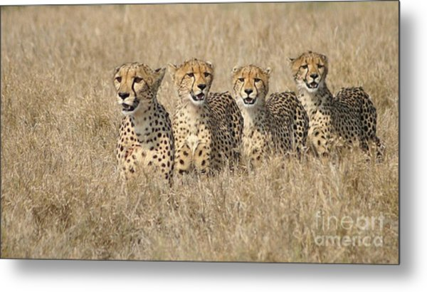 Cheetah Family Metal Print