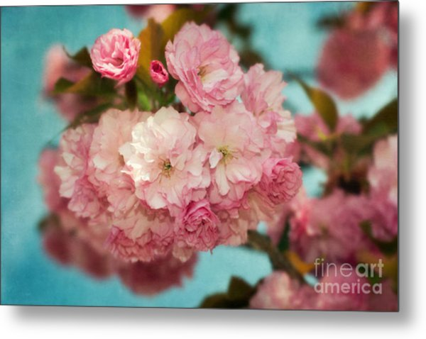 Cherry Blossoms Kanzan Three Metal Print by Susan Isakson